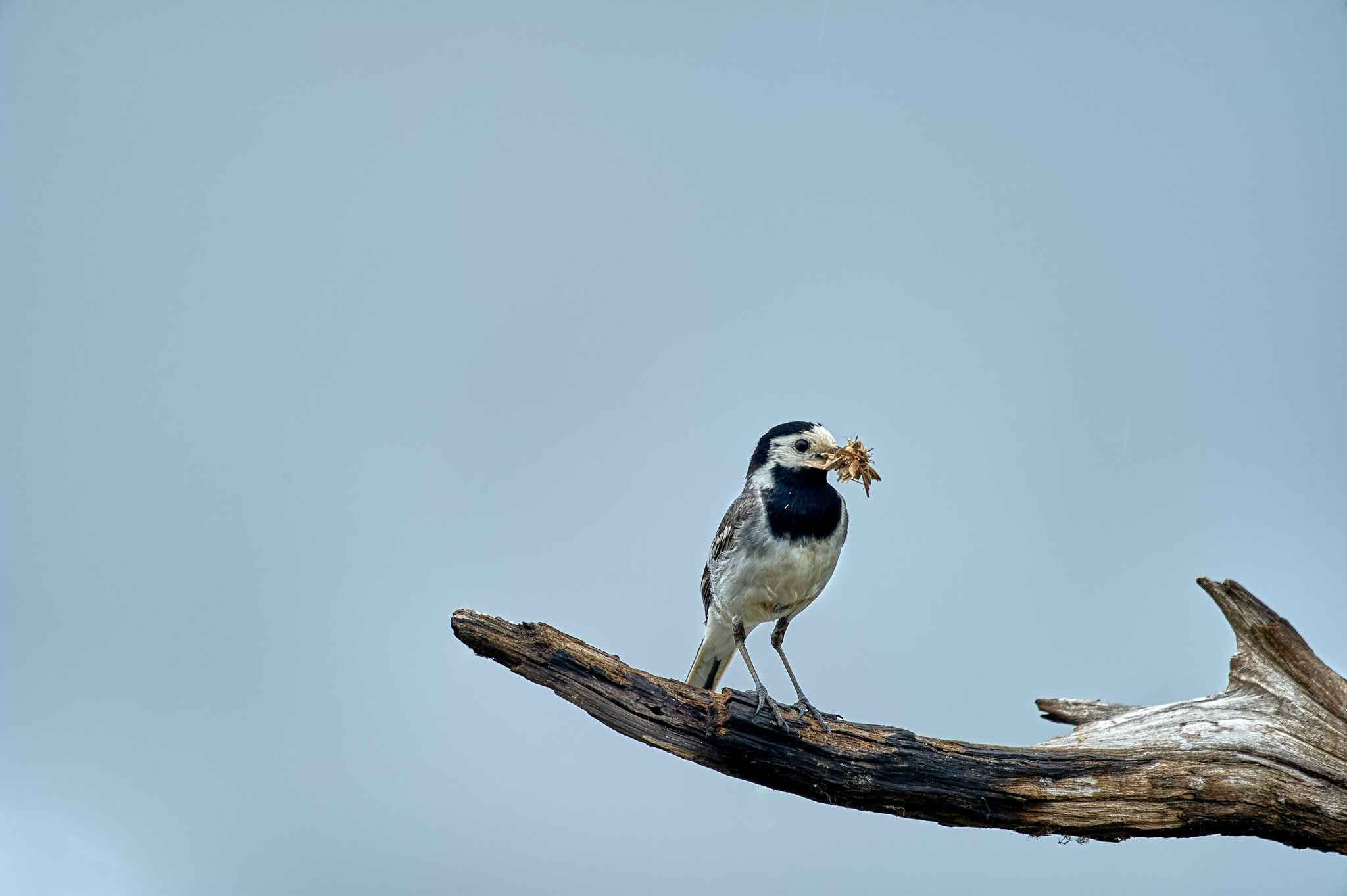 © Armin Demuth - Vögel